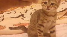 Dida the cat strikes back - Dida contre-attaque #cat #cats #gata #gato #gatinha #cute #chat #chaton #rigolo
