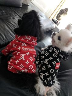 Pups got New Hoodies Girl Dog Clothes, Cute Dog Clothes, Small Dog Clothes, Cute Baby Dogs, Cute Dogs And Puppies, Cute Baby Animals, Dog Boots, Designer Dog Clothes, Pet Fashion