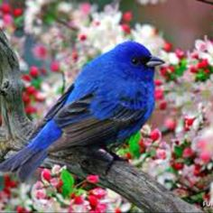 What would our world be like without back yard song birds?