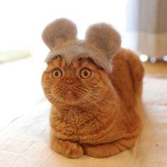 Милые котики в шляпах, сделанных из их собственной шерсти « FotoRelax