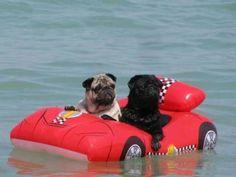 Pug boat!