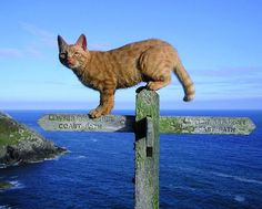 """Author, illustrator and photographer Jackie Morris. Chat sur une croix en Pays de Galles. """"A cat perched on top of a wooden signpost, posing like a moody catwalk model, with a stunning view of the Pembrokeshire coastline in the background."""" Clic 2X pour d'autres photos des Wales."""