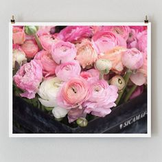 "Fine Art Photography, Paris ""Pink Ranunculus,"" Paris Photography, Extra Large Wall Art Print, Flower Photography"
