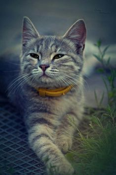Bengal Cat Facts Hello there bright people. Cool Cats, Cute Cats And Kittens, I Love Cats, Crazy Cats, Pretty Cats, Beautiful Cats, Pretty Kitty, Cat Breeds, Cat Lovers