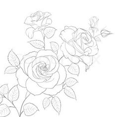 Abstract rose free-hand drawing in a graphic style points and ...