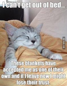 Aww Kitties.. are so adorable!!