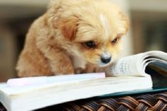 "The ""Learning to Read"" Reader #dog #humor @BadgerMaps"