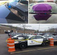 Un uccello ha costruito il suo nido sopra una macchina della polizia. I poliziotti hanno fissato sul parabrezza un ombrello per tener l'animale al sicuro e isolato l'auto con un nastro metrico in modo che nessuno potesse infastidirlo.