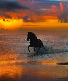 Cute Horses, Pretty Horses, Horse Love, Dark Horse, Black Horses, Horse Pictures, Nature Pictures, Animal Pictures, Beautiful Pictures
