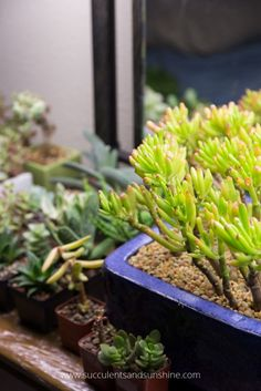 This post makes it simple to figure out what kind of grow lights to buy for your indoor succulents