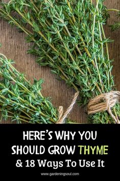 Herb Garden Design Here are the reasons why thyme deserves a place in every garden. Growing Herbs, Growing Vegetables, Thyme Uses, Organic Insecticide, Organic Horticulture, Organic Gardening Tips, Vegetable Gardening, Flower Gardening, Balcony Gardening