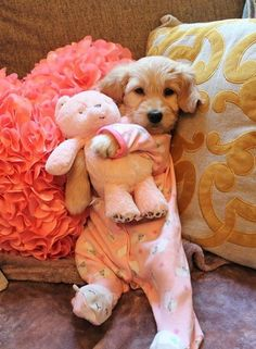 Super Cute Puppies, Cute Baby Dogs, Cute Little Puppies, Cute Funny Dogs, Super Cute Animals, Cute Dogs And Puppies, Cute Funny Animals, Cute Baby Animals, Puppies In Pajamas