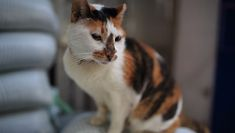Older pets have often come to the shelter after years of living in homes so theyre usually already housetrained saving you from weeks months or in some cases even years of stress. Cat Images Hd, Funny Cat Images, Very Cute Cat Images, Funny Cat Videos, Funny Cat Pictures, Animals Images, Funny Cats, Cat Pictures For Kids, Cute Cats Photos