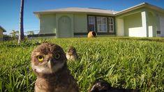 GoPro: Owl Dance-Off