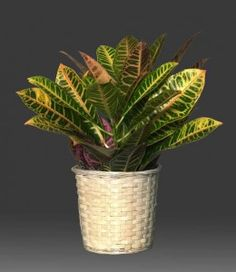 Top 5 low-light/hard to kill house plants