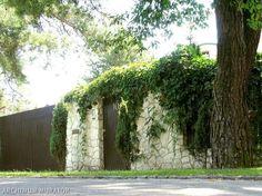 Surowe ogrodzenie z kamienia zmiękczają długie pędy roślin. Taka pełna nierówności ściana to świetna podpora dla pnączy