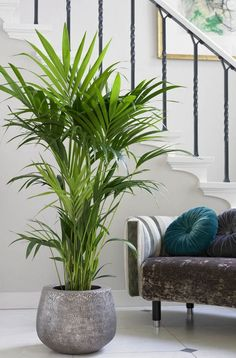Decoration ideas for rooms with large plants – Indoor plants – … - Pflanzideen Easy House Plants, House Plants Decor, Plant Design, Garden Design, House Design, Low Maintenance Indoor Plants, Plantas Indoor, Apartment Plants, Green Apartment