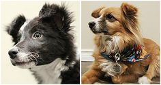 My DIY pet grooming spray/household cleaner recipe stuffs - Chazhound Dog Forum