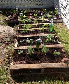 Water Whimsies in my pallet herb garden