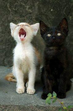 Aida Vuotto 22 h ·    miau meow miau