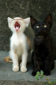 Mum!  He's been calling me names again!