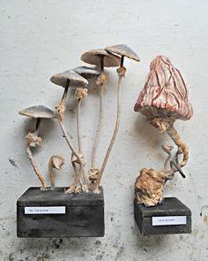 Mister Finch: Fungus fungus fungus.....