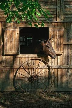 Farm:  Old #barn, horse, and wagon wheel.