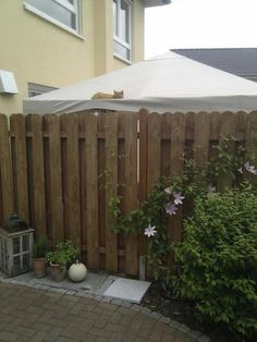 Our cat, neighbours gazebo.