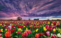 Çiçek Bahçeleri ile ilgili görsel sonucu