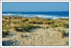 The Atlantic coast - Le Porge, Aquitaine