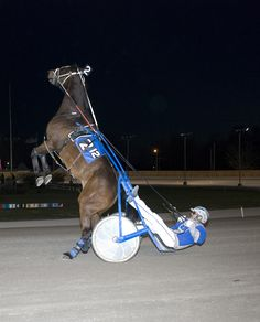 Standardbred Press Releases: BR - A Year of Changes Awaits the 2013 Season at Buffalo Raceway! Bay Horse, Horse Tack, Horse Photos, Horse Pictures, Most Beautiful Animals, Beautiful Horses, Standardbred Racing, Harness Racing, Thoroughbred Horse