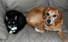 Unlikely Friendships: Cats and Other Species