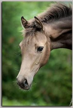 Beautiful lovely colored horse. Such a pretty face! Big beautiful kind eyes!