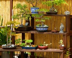 Asian Landscape Design, Pictures, Remodel, Decor and Ideas - page 4