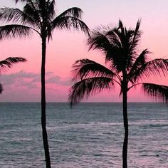 summer vibes #summer #vibes #tropical #paradise #hawaii #sunset #ocean #beach #swim #swimming #swimwear #swimsuit #pink #blue #amazing #beautiful #lol #cute #pretty #cottoncandy #palm #palmtrees #tumblr #goals by feedgoalsxo