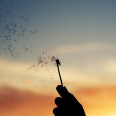 Make a wish, float away on childhood memories. Dandelion Wallpaper, Dandelion Wish, Love Photography, The Places Youll Go, Pretty Pictures, Life Is Beautiful, Cute Wallpapers, Make Me Smile, The Dreamers