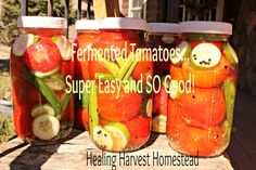 Make Fermented Tomatoes! Filled with Probiotic Goodness and SO Delicious!