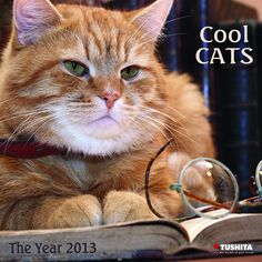Cool Cats Wall Calendar: This new wall calendar for 2013 features a dozen color photographic portraits of cats at their most composed. Days and months are printed in English, German, Spanish, Italian, and French.  http://www.calendars.com/Assorted-Cats/Cool-Cats-2013-Wall-Calendar/prod201300006626/?categoryId=cat00181=cat00181#