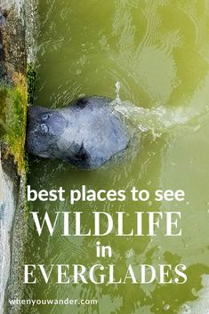 Mangroves and Manatees – What to do in Everglades National Park Everglades National Park, Capitol Reef National Park, Rainier National Park, National Parks Usa, Sequoia National Park, Florida Everglades, Visit Florida, Florida Vacation, Florida Travel