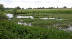 Flußlandschaft an der Mündung, Foto: S. Hopp