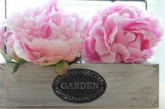 Pfingstrosen mit ihren prächtigen Blüten sehr schön für die Deko