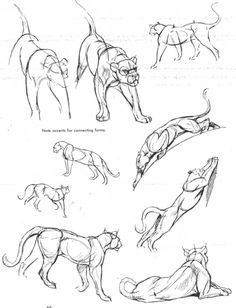 25 Beautiful Animal Drawings for your inspiration - How to Draw Animals - - 25 Beautiful Animal Drawings for your inspiration – How to Draw Animals art Für Tiere Cat Anatomy, Animal Anatomy, Anatomy Drawing, Cat Drawing, Drawing Sketches, Wings Drawing, Drawing Step, Sketching, Cat Reference