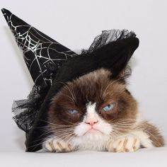 Tartar Sauce aka Grumpy Cat likes to girl it up once in awhile too. This hat fits her purrsonality purrfectly, no?