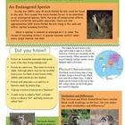 Motivate all readers and researchers with Fast Facts - The Black-footed Ferret! This printable one page, student-friendly, non-fiction resource pro...