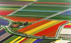 Земля цветёт, ухожена роскошно, Европа в замках, виллах и цветах, Япония беспочвенная мощно Содержит скот на  http://lnk.al/5qLW