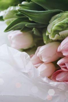 Tulips via juliak.metromode.se #Flowers #Tulips