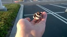 ▶ Patrick Smith was taking a break just outside of his Southern California workplace, when he noticed this baby bird trapped in a PVC pipe. Patrick rescued the bird and filmed its joyful reunion with its parents. The bird Patrick rescued is a plover that is best known for using a ''broken wing'' distraction technique. If the nest is in danger of attack from a predator, an adult bird will walk away from the nest dragging its wing on the ground to look like easier prey and draw the predator…