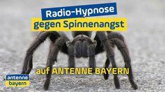 Radio-Hypnose gegen Spinnenangst | ANTENNE BAYERN #hypnose #spinnenangst #stream #mp3 #hypnosetherapie Radios, Angst, Hand Spinning