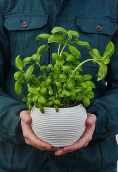 Cirrus - Flower pot