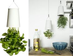 Boskke sky-planters.  Great way to grow fresh herbs in the kitchen.  I'd love to get a couple of these.